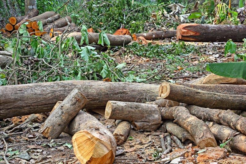 Reduzca los troncos de árbol foto de archivo