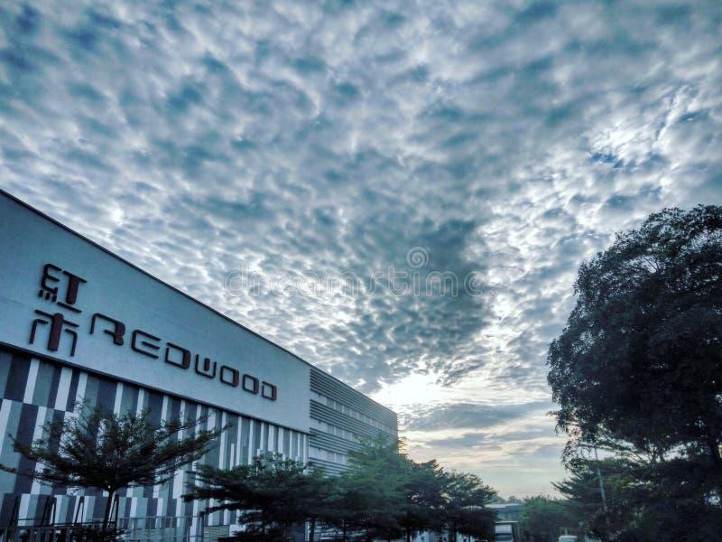 Redwood Company in Malaysia lizenzfreies stockfoto