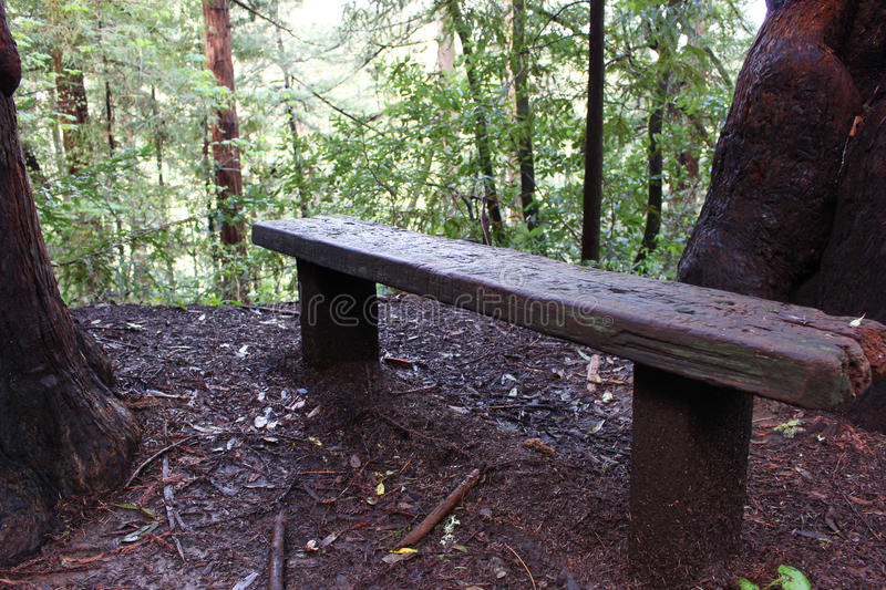 Redwood forest bench stock images