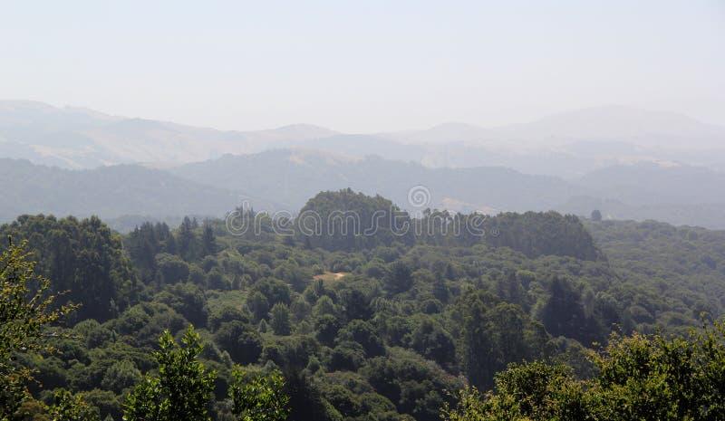 Redwood krajobraz obrazy stock