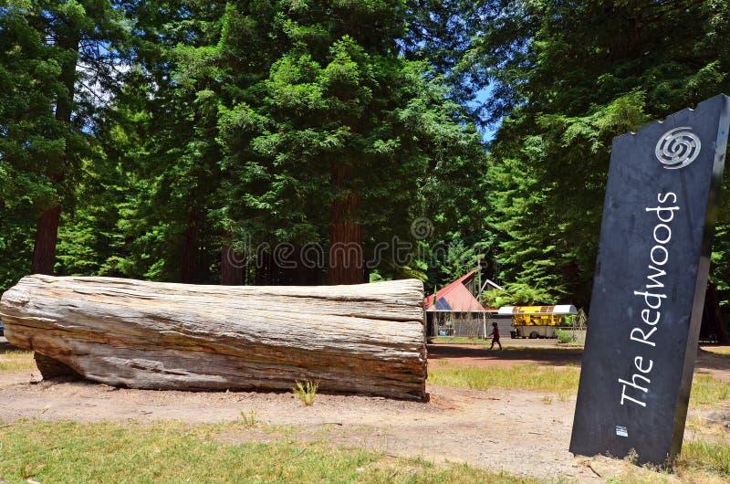 Redwoods в Rotorua Новой Зеландии стоковые изображения
