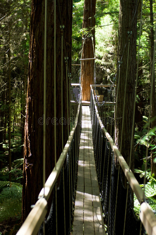Redwoods ` spaceru Drzewny ` 01 obraz stock