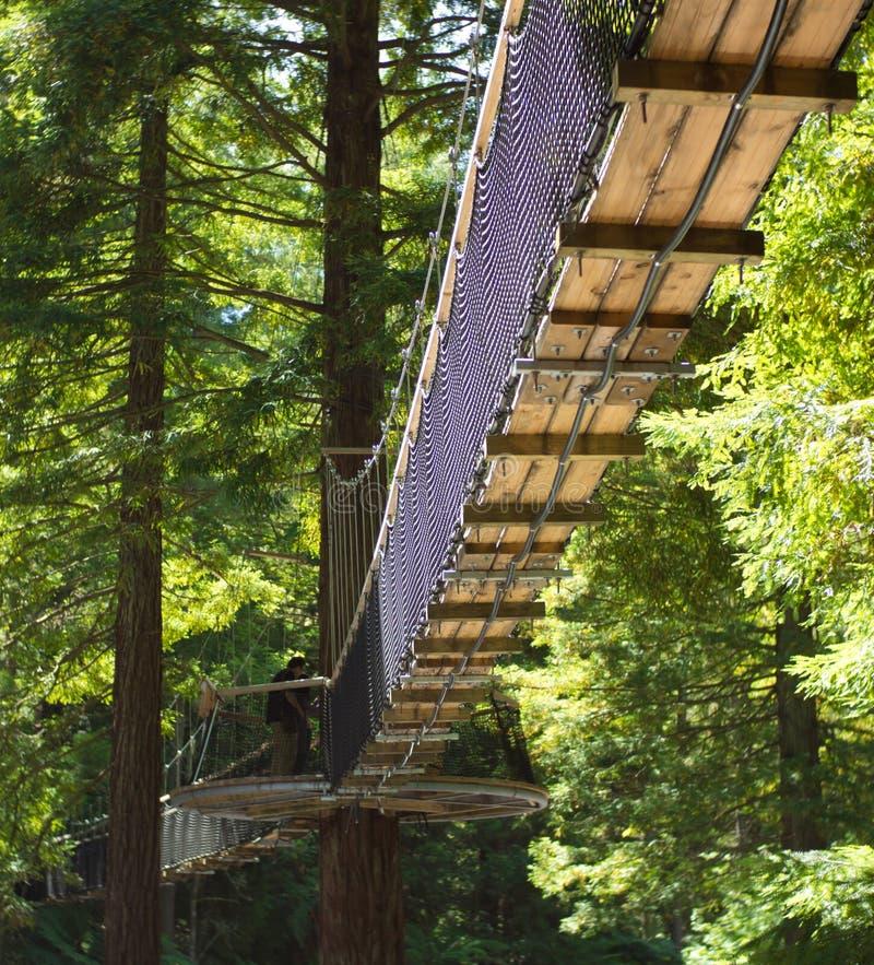 Redwoods ` spaceru Drzewny ` 02 zdjęcie stock