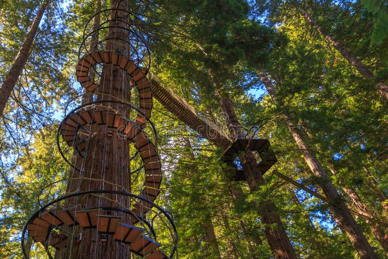 Redwoods-Wald in Neuseeland lizenzfreies stockbild