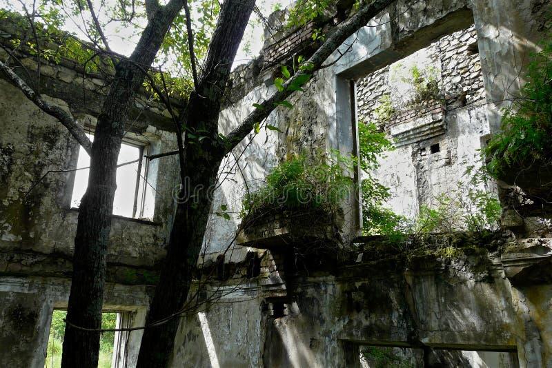 Ree e os arbustos brotaram dentro de uma construção dilapidada abandonada imagem de stock