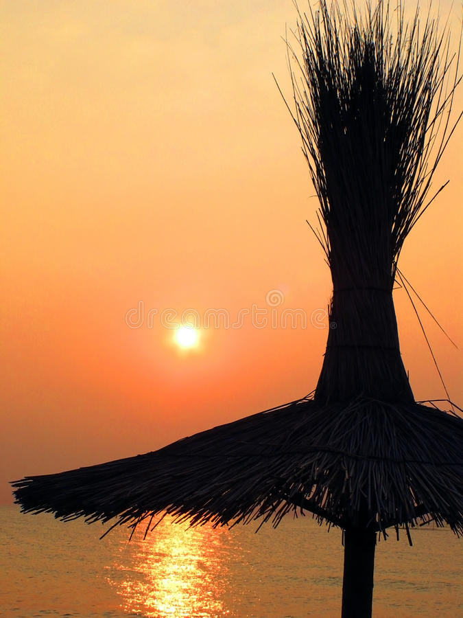 Download Reed stock image. Image of cover, sunrise, romania, reed - 16018941