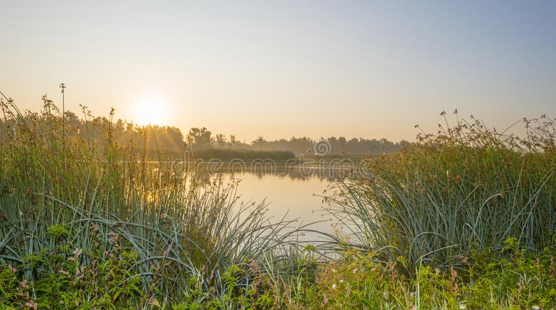 Reed along the edge of a foggy lake below a blue sky at sunrise. In summer stock photo