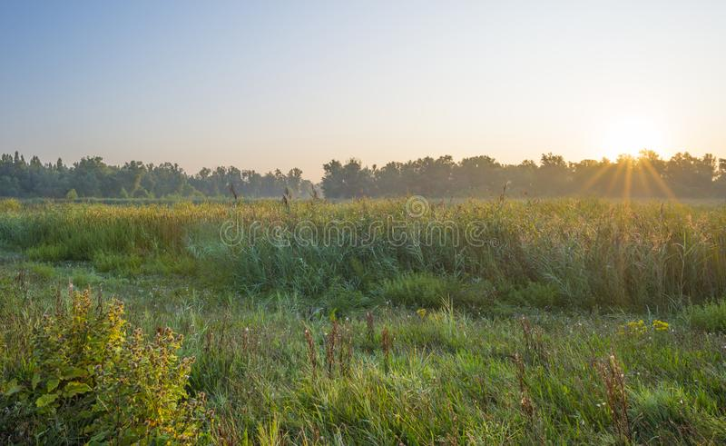 Reed along the edge of a foggy lake below a blue sky at sunrise. In summer stock photos