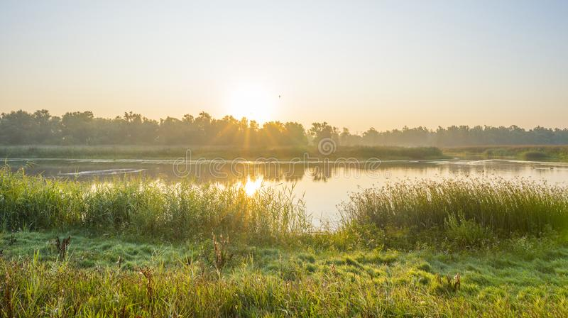 Reed along the edge of a foggy lake below a blue sky at sunrise. In summer stock images
