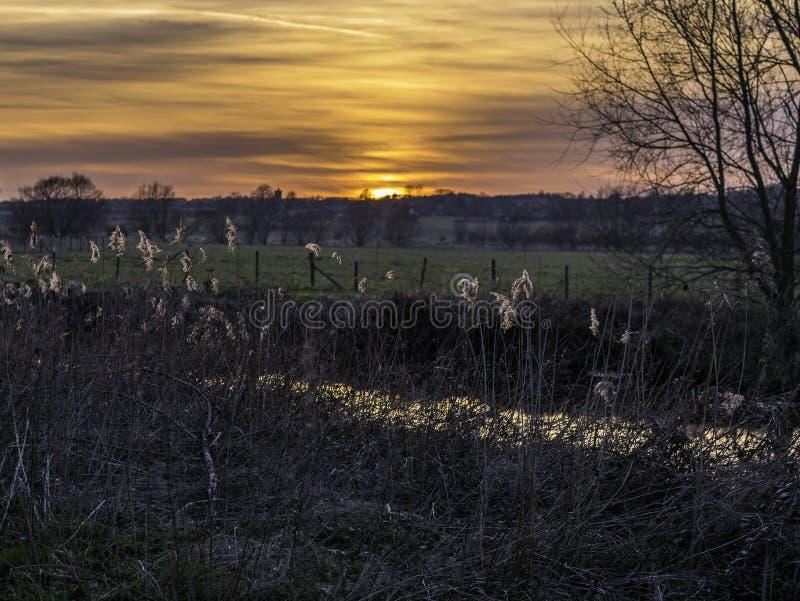 Reed Bed éclairé à contre-jour au coucher du soleil photographie stock