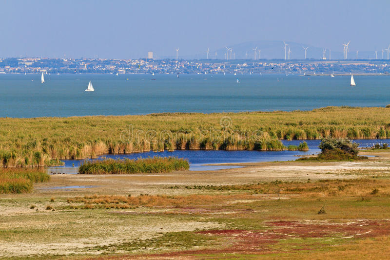 Reed Belt Landscape i nationalpark fotografering för bildbyråer