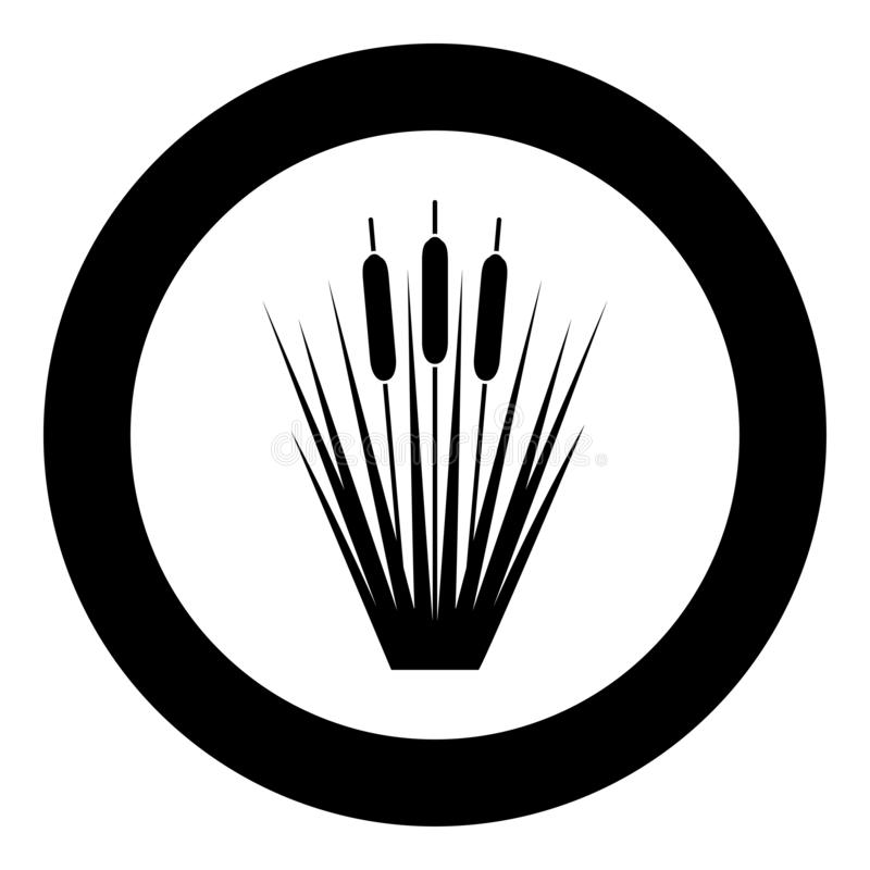 Reed Bulrush Reeds Club-rush ling Cane rush icon in circle round black color vector illustration flat style image. Reed Bulrush Reeds Club-rush ling Cane rush vector illustration