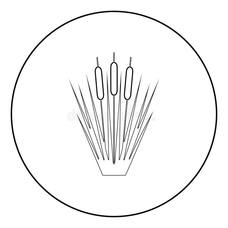 145. Reed Bulrush Reeds Club-rush ling Cane rush icon in circle round outline black color vector illustration flat style simple image vector illustration