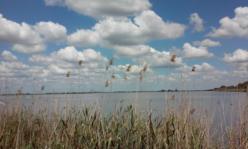 Reed e o lago foto de stock