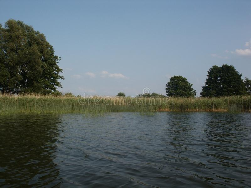 Reed edge along the water. Wetlands grass horizon, reed edge line surrounding the lake stock photo