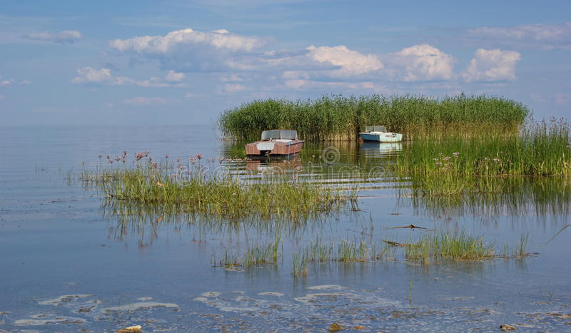Reed island and boats, Peipus (Chudskoe) lake, Estonia royalty free stock image