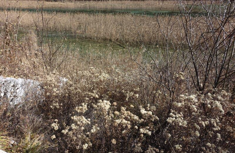 Reed Lake at Heavenly Jiuzhaigou stock photos