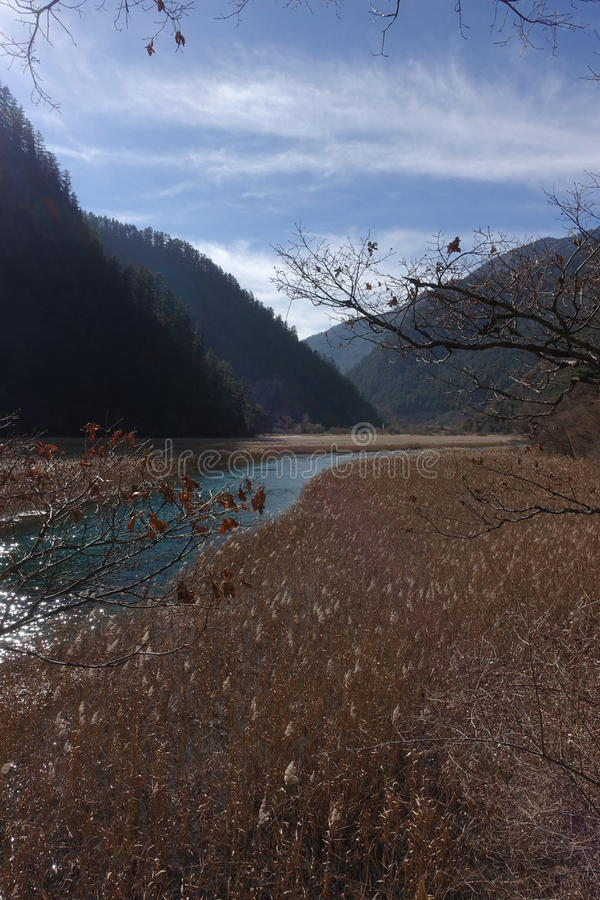 Reed Lake at Heavenly Jiuzhaigou royalty free stock images