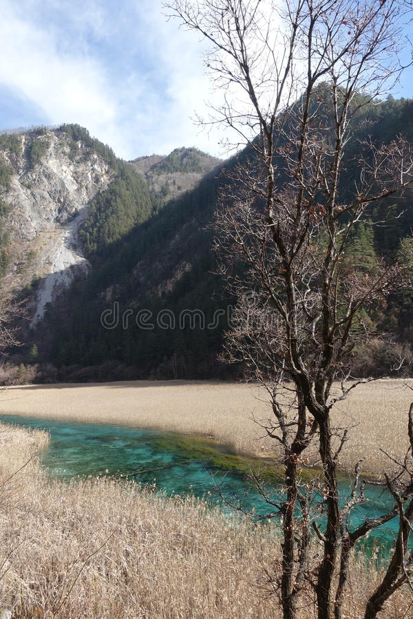 Reed Lake at Heavenly Jiuzhaigou royalty free stock photo