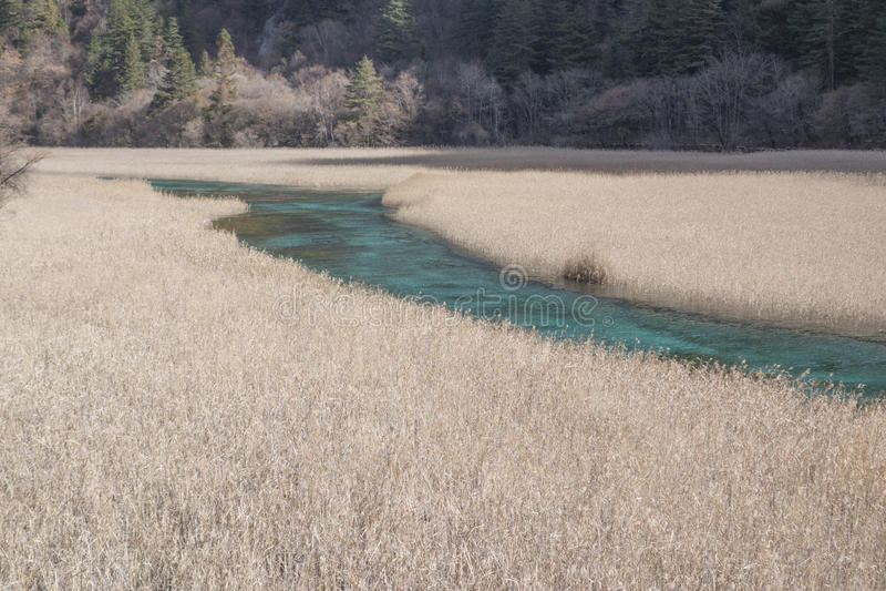 Reed Lake royalty free stock photos