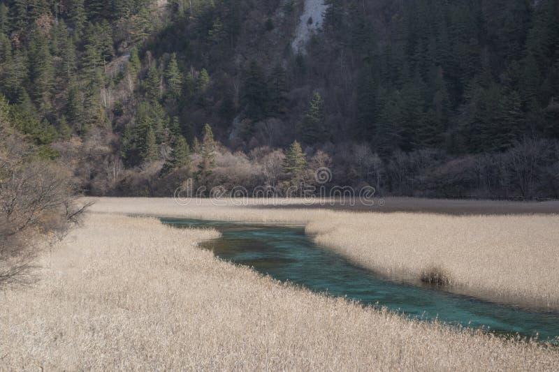 Reed Lake stock photos
