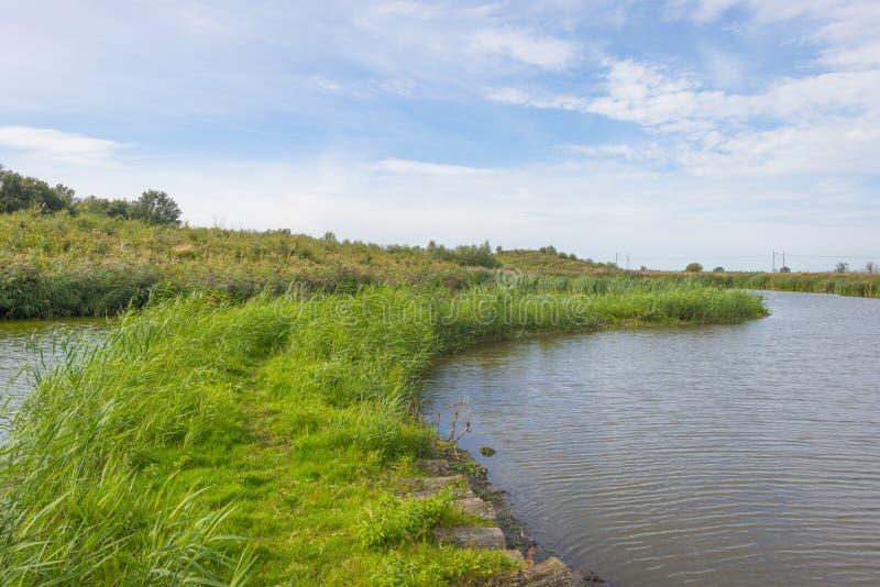 Reed le long d'un chemin dans un lac en parc naturel à la chute images libres de droits