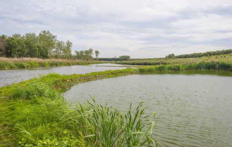 Reed le long d'un chemin dans un lac en parc naturel à la chute image stock