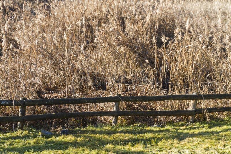 Reed Marsh imagem de stock