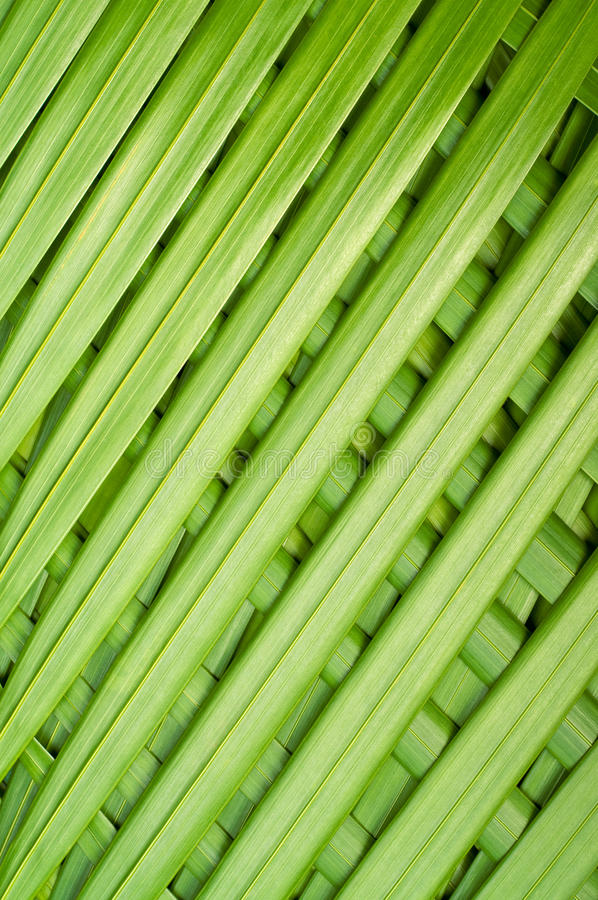 Reed palm leaves