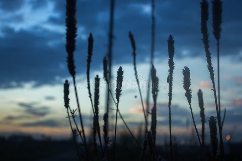 Reed& x27; s-Schattenbild unter Hügeln stockfotos