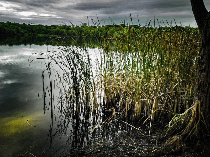 Reed sul mare con il cielo grigio nuvoloso scuro nel fondo immagine stock libera da diritti