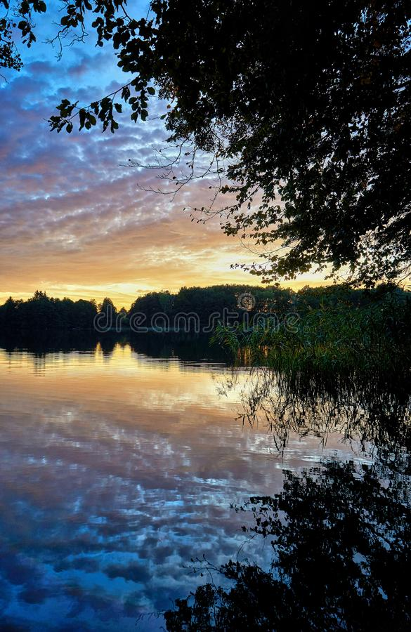 Reed in the sunset at the forest lake. Germany royalty free stock image