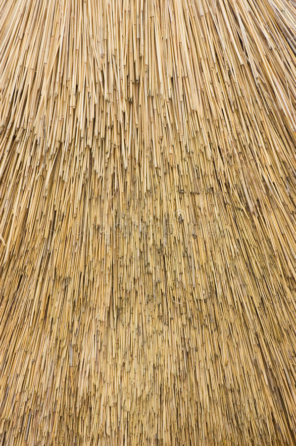 Download Reed Thatch stock image. Image of yellow, straw, thatched - 2953325
