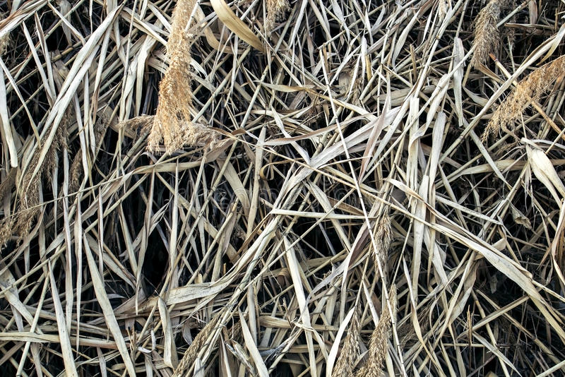 Reed Thatch Detail, Hay Straw Stack Background Texture, Agriculture Natural Abstract Striped Background,. Weave, Twisted Twigs, Dried Stalks, Yellow Cane stock photos