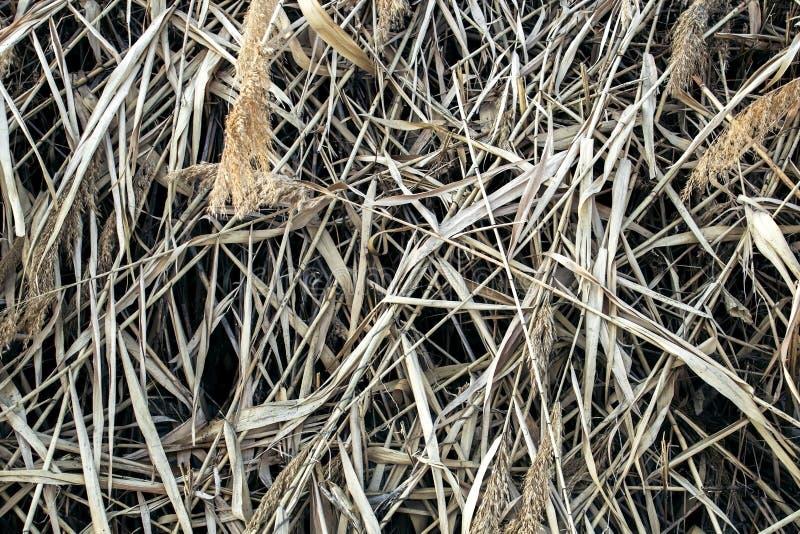 Reed Thatch Detail, Hay Straw Stack Background Texture, fondo rayado abstracto natural de la agricultura, fotos de archivo