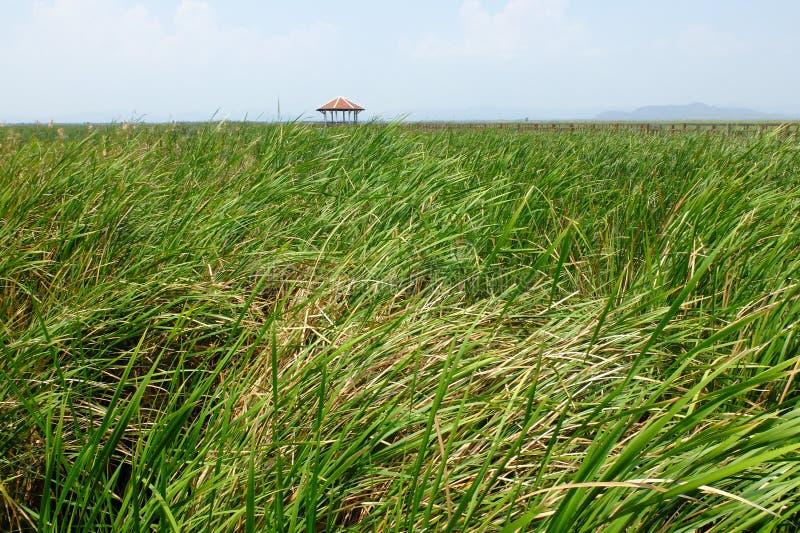 Reed und allgemeines Rasthaus bei Khao Sam Roi Yod National Park, Thailand stockbild