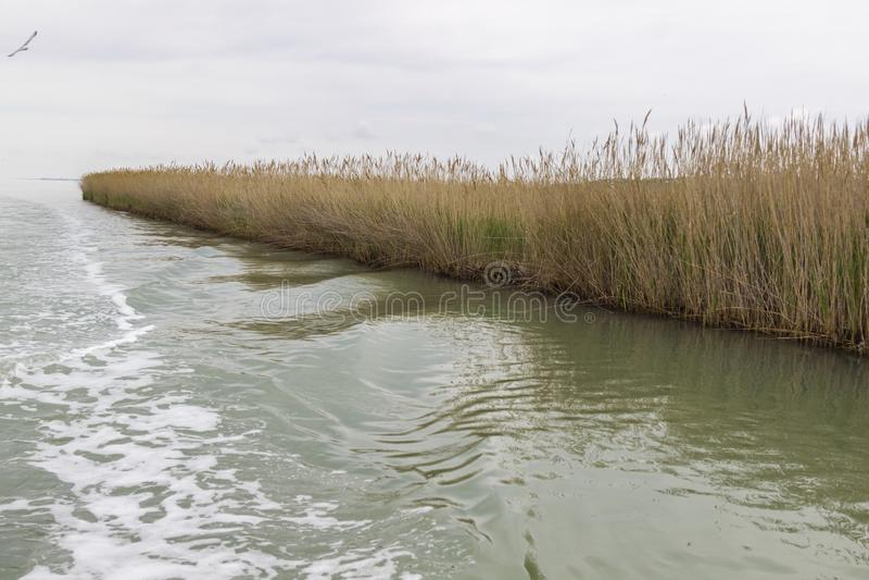 Reed wächst auf dem Ufer des Sees Spur auf dem Wasser vom Boot stockfotos