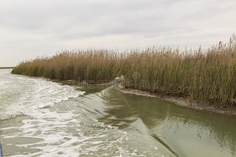 Reed w?chst auf dem Ufer des Sees Spur auf dem Wasser vom Boot lizenzfreie stockfotografie