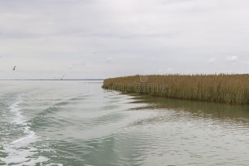 Reed w?chst auf dem Ufer des Sees Spur auf dem Wasser vom Boot lizenzfreie stockbilder