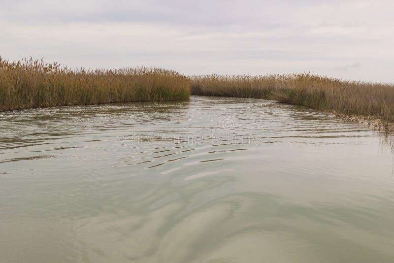 Reed w?chst auf dem Ufer des Sees Spur auf dem Wasser vom Boot stockbilder