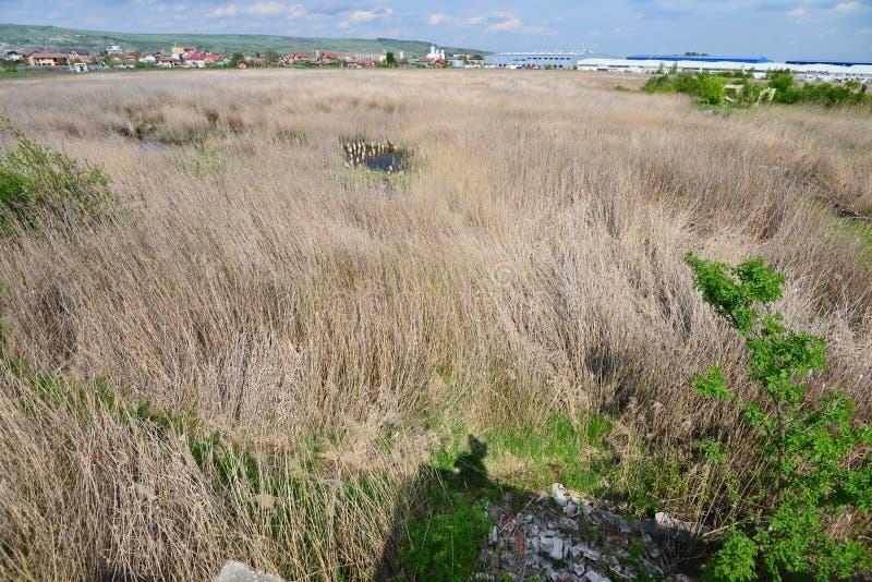 Reed, welches das Pool bedeckt, bleibt von den Someseni-Bädern nahe Klausenburg lizenzfreie stockfotografie