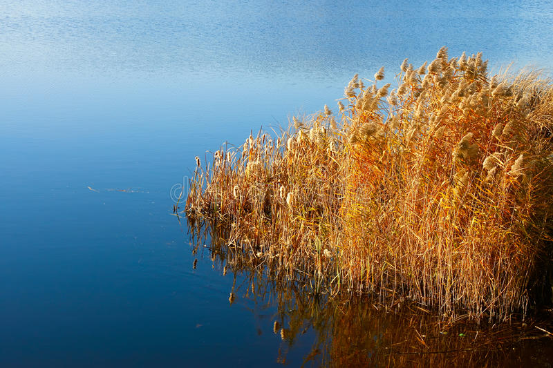 Download Reeded In The Reservoir (I) Stock Photo - Image: 17015060