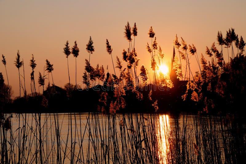 Reedlandschaft lizenzfreies stockbild