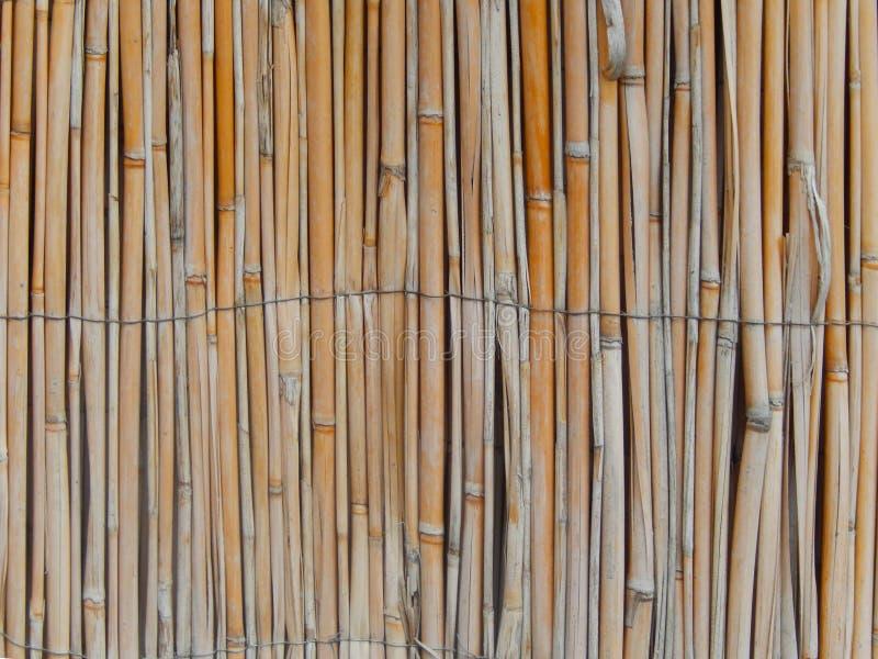 Reeds текстура стены тросточки стоковое изображение rf