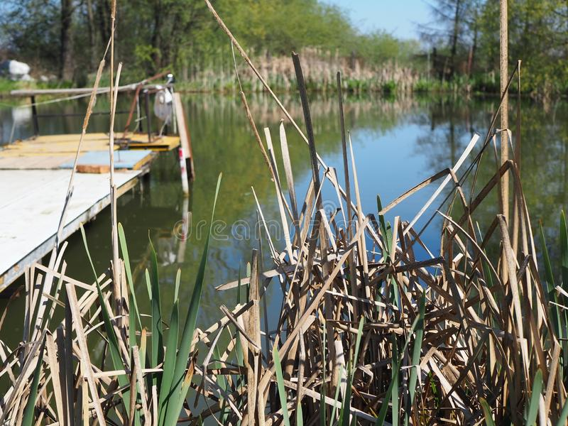 Reeds Against Water stock images