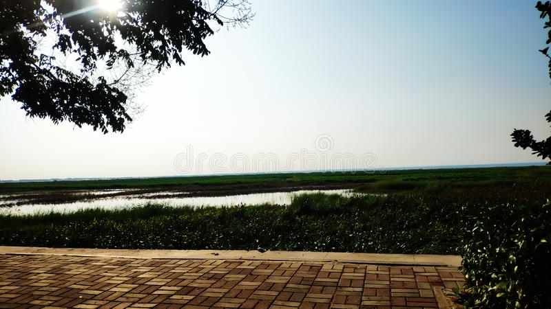 The reeds along the Yellow River and the riverside of Yuncheng, Shanxi Province. There was a heavy rain, a lot more water and a wider river stock photo