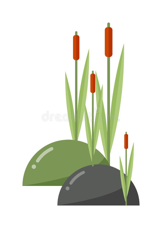 Free Reeds And Cattail Vector Illustration. Stock Image - 75005611