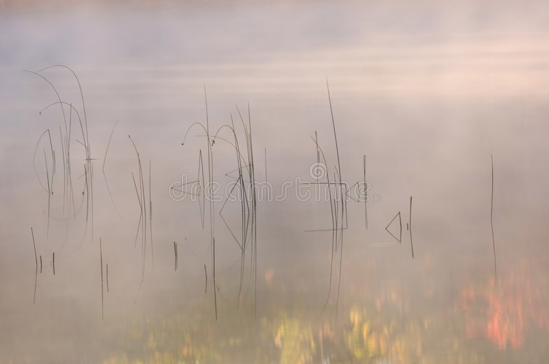 Reeds and Autumn Reflections royalty free stock photos