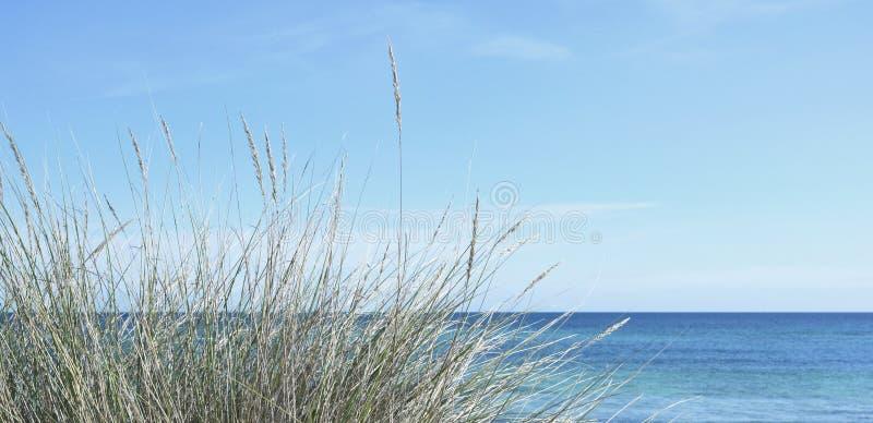 Reeds and blue sea stock photos