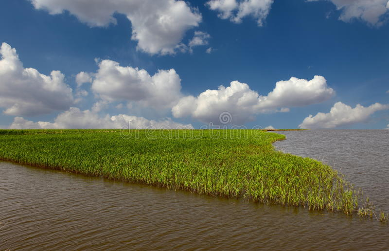 Download Reeds With Blue Sky At Sunrise Stock Image - Image: 21779955